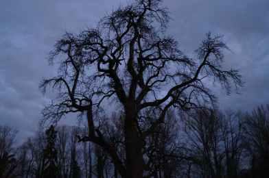 Mamawelt Baum by Night