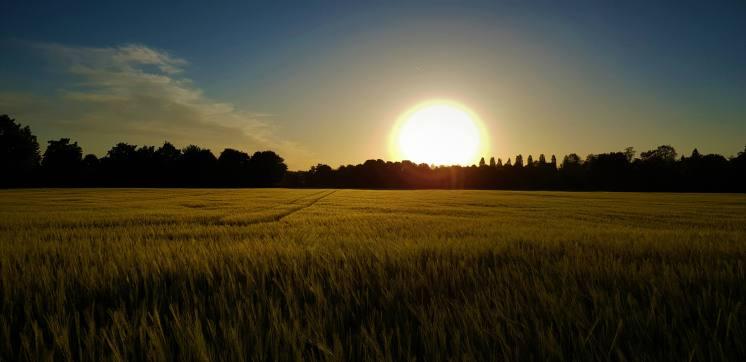 Mamawelt Sun