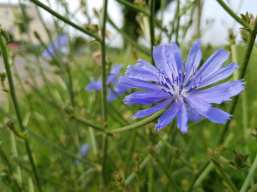 Mamawelt Blume
