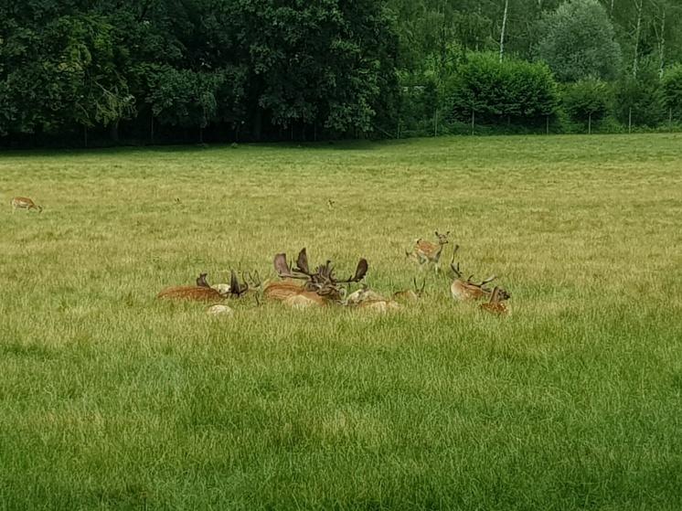 Wildpark Poing Hirsche