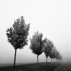 Bäume im Nebel