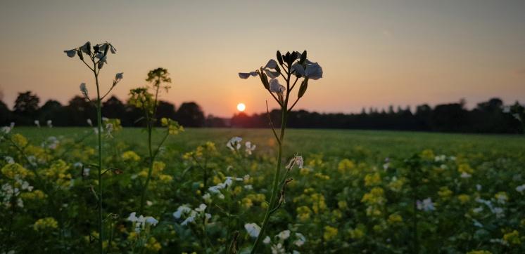 Mamawelt Blume-Sonne-709